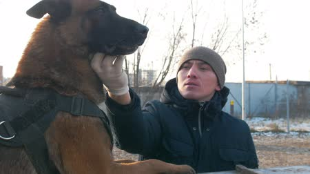 plac zabaw : A smiling trainer petting his cute german shepherd dog