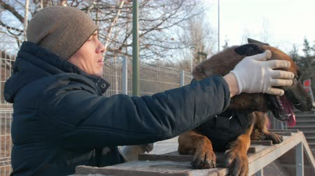 plac zabaw : A smiling trainer petting his german shepherd dog sitting on the stand