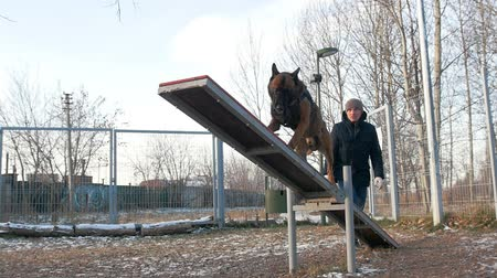 plac zabaw : A german shepherd dog standing on the double swing