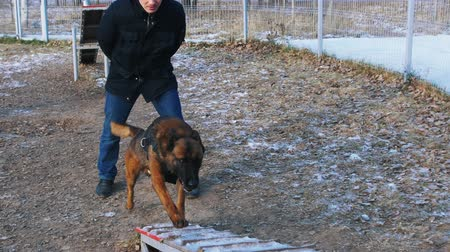 plac zabaw : A german shepherd dog running up on the stand by the trainers command - outdoors training