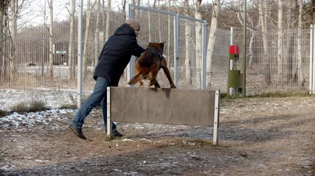 pásztor : A man training german shepherd dog on the training field - a dog jumping over the barrier after the stick Stock mozgókép