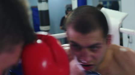 bokser : Box training - two sweaty men having an aggressive fight on the boxing ring Stockvideo