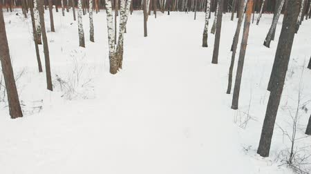 narciarz : RUSSIA, KAZAN 08-02-2020: people skiing in the forest