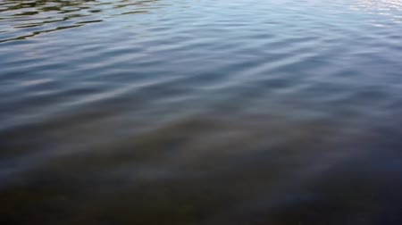 dny : Looking down and across a the surface of the water in a shallow canal in Bonita Springs, Florida