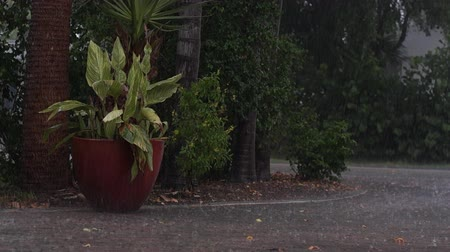 neapol : a heavy downpour in tropical florida. View of large potted plant and trees along driveway during tropical rainstorn in Naples Florida, street can be seen flooding, with audio.