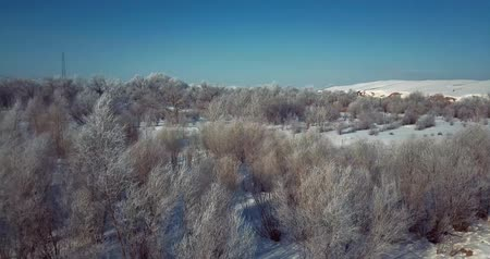 cover : 4K Aerial shot of trees covered in snow frost on a cold winter day Stock Footage