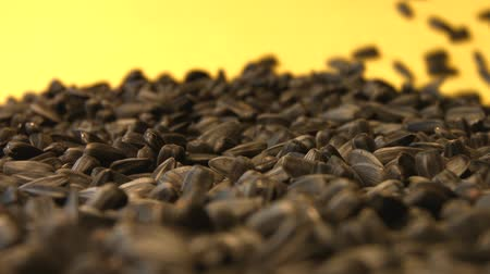 girassóis : Sunflower seeds on a yellow background. Slow motion. Close-up. 2 Shots Vídeos