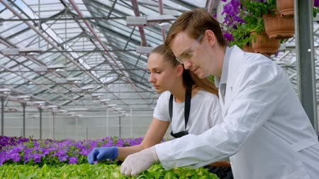 botanikus : A young man and woman in white coats and black aprons, scientists, biologists or agronomists examine and analyze flowers and green plants in the greenhouse. Selection and care of plants. Stock mozgókép