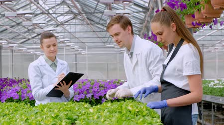 botanikus : A young man and two women in white coats and black aprons. Three scientists, biologists or agronomists examine and analyze flowers and green plants in a greenhouse. Write data to the tablet. Selection and care of plants. Stock mozgókép