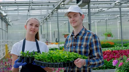 biologist : Two young farmers, an agronomist or a florist in a plaid work shirt and apron are holding green plants in the background of a large bright greenhouse. Industrial cultivation of flowers and vegetables.