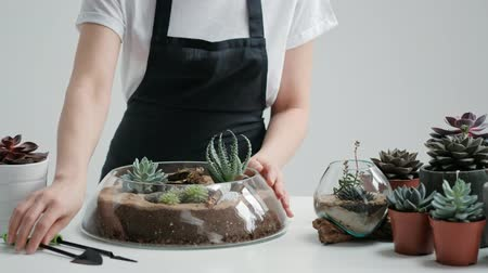 fioriera : Female florist gardener decorates a mini garden in a glass vase with succulents and cacti in the sand. The concept of the florist decorator. Filmati Stock