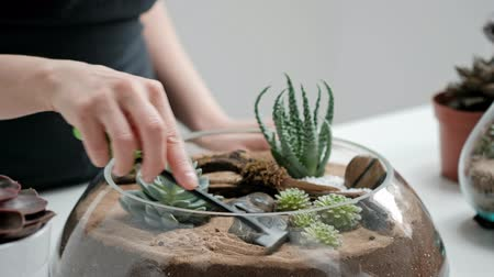 decorador : Female florist gardener decorates a mini garden in a glass vase with succulents and cacti in the sand. The concept of the florist decorator. Stock Footage