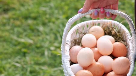 tüy : Many chicken eggs are in the basket in the hands of a woman farm. On the background of green grass. Stok Video