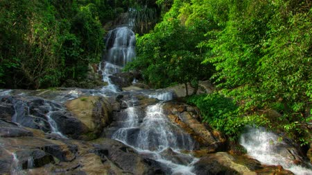 arroyo : Cascada tropical timelapse Archivo de Video