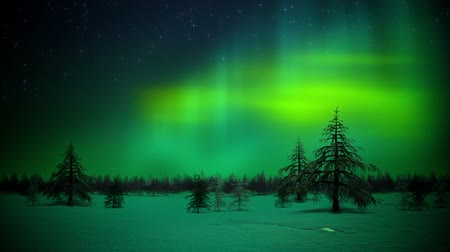 northern nature : Polar lights in forest loop