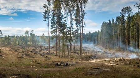 повреждение : Deforestation and the destruction of forests by burning trees Стоковые видеозаписи