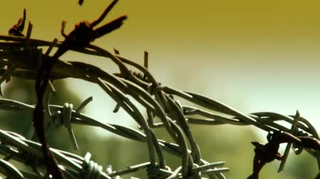 farpa : Barbed wire close-up Stock Footage