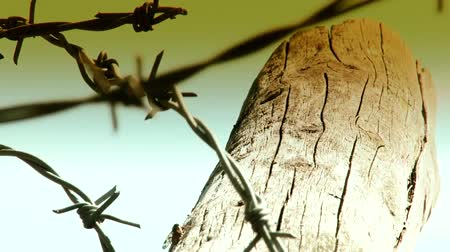 tapeçaria : Barbed wire close-up Stock Footage