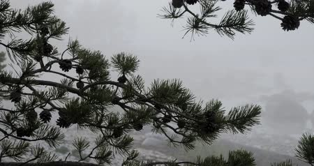 boulders : Time lapse close up of pine tree branches with pine cones on a rocky beach with the seashore and thick fog behind them