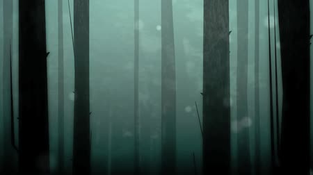 deep forest : Dynamic graphic animation using paper cutout styled elements to illustrate a spooky or enchanted forest.