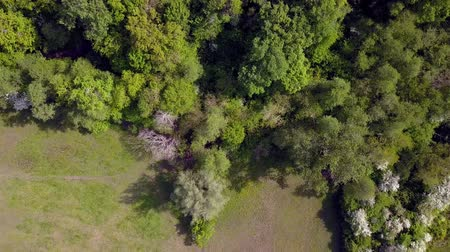 4K aerial of flying over a beautiful green forest in a rural landscape