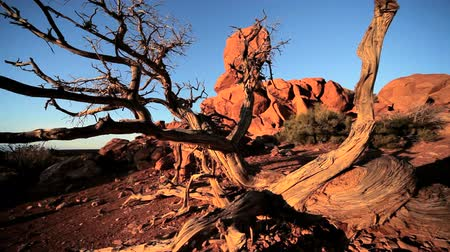 засушливый : Red sandstone rock formations sculptured by nature in an arid  desert environment