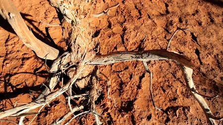 ortam : Overhead view of the branches of a dead tree rising out of a cracked earth environment