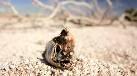sucho : Dried up lake bed with a skeletal fish and brittle white wood resulting from drought conditions