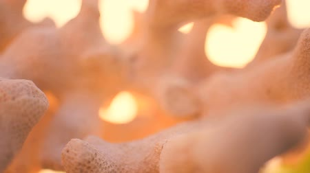 manmade : Extreme close-up of the fragile beauty of a piece of coral washed up on the beach Stock Footage