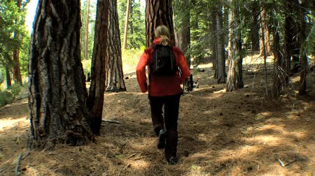 feminino : Lone female on an outdoor trek through the natural woodland in a national park Vídeos