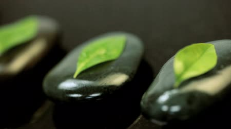 пять : Five fresh green leaves lying on flat black stones sprinkled with spa water on a black marble surface