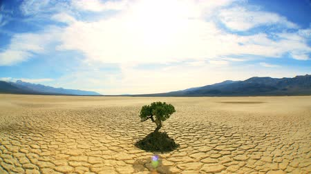 climate : Concept climate change shot of green tree growing in arid desert landscape with hills behind Stock Footage