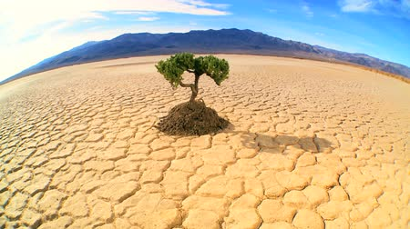 dead tree : Concept climate change shot of green tree growing in barren desert landscape in wide-angle