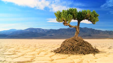 climate : Time-lapse cloud concept shot of living tree in arid desert landscape with hills behind  Stock Footage