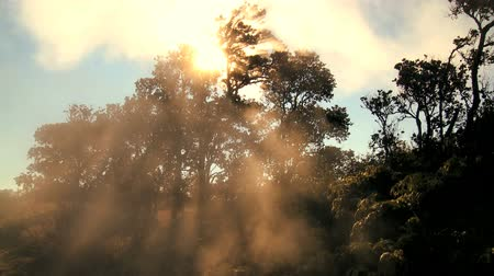 ślady stóp : Time-lapse cloud & sunlight filtering down through environmentally clean trees Wideo