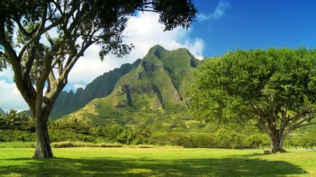 on nature : Rugged beauty of Na Pali cliffs seen from state parkland in Hawaiin Islands Stock Footage