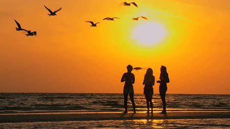 друг : Three girls on a beach at sunset feeding overhead sea birds flying 60FPS Стоковые видеозаписи
