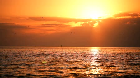 setting : Beautiful sun setting over a tranquil ocean with sea birds flying
