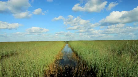 посетитель : Airboat traveling through the Florida Everglades