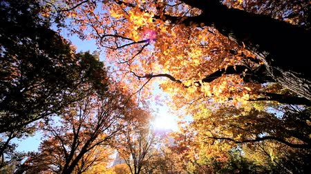 központi : Trees with changing colored leaves in New Yorks Central Park in fall