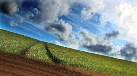 ekonomi : Dramatic time-lapse of clouds & crops growing in a field
