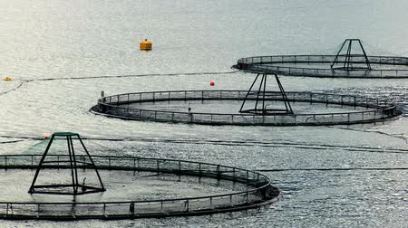 fishing industry : Floating nets of a salmon farm on a glacial fjord