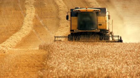 kombájn : Combine harvester gathers the wheat crop
