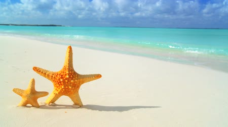 travel tropical : Starfish washed up on white sandy beach & aqua blue sea Stock Footage