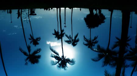 paraíso : Reflections of people & palm trees in silhouette