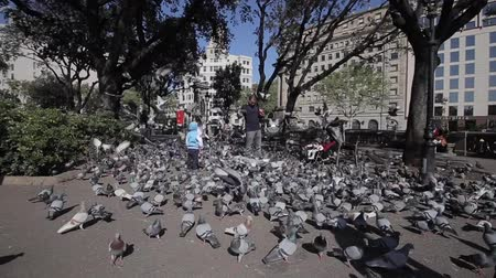 feeding ground : Barcelona, Spain - April 27, 2018: An adult man feeding many doves in the park