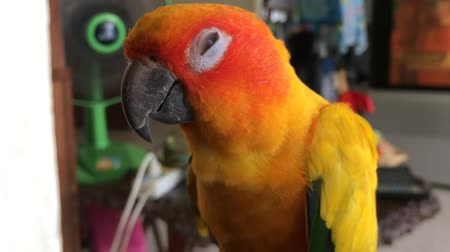 arara : Beautiful orange parrot, closed eyes When the fan is turned on, the fan will have cool air. Until sleeping in your home.