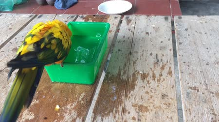 arara : Yellow-green parrots are showering in the bowl green.