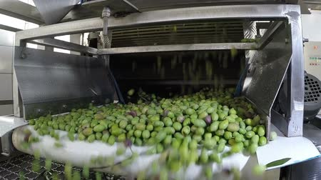 proces : The process of olive cleaning in a modern oil mill