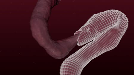 restaurálás : Restoration of the surface of the damaged nerves or intestines. Medical 3D animation